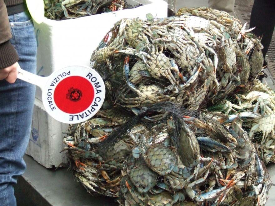 Menfi, 4.700 chili di pesce avariato sequestrati in uno stabilimento