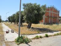 Avola, piazzetta di viale Indipendenza sommersa da sterpaglie (FOTO)