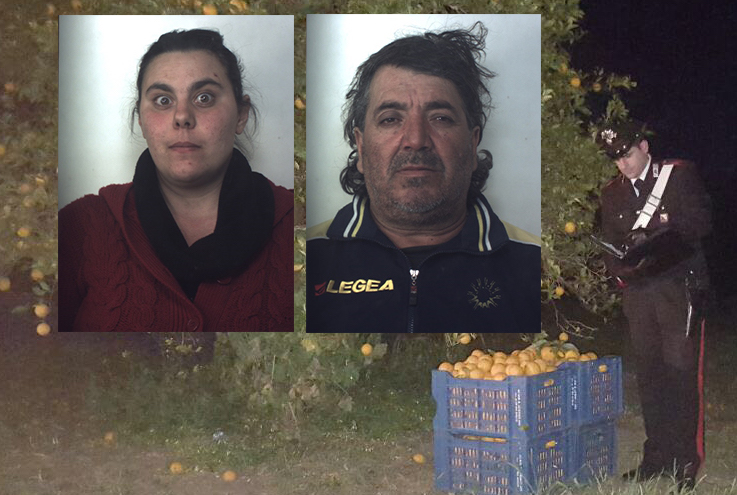 Siracusa, sorpresi alla Fonte Ciane a rubare 300 chili di arance