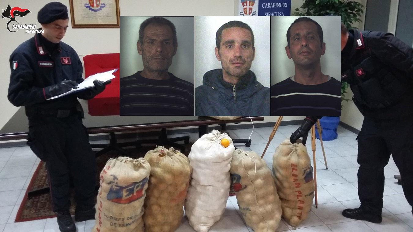 Floridia, rubano 700 chili di arance e vengono presi: tre arresti