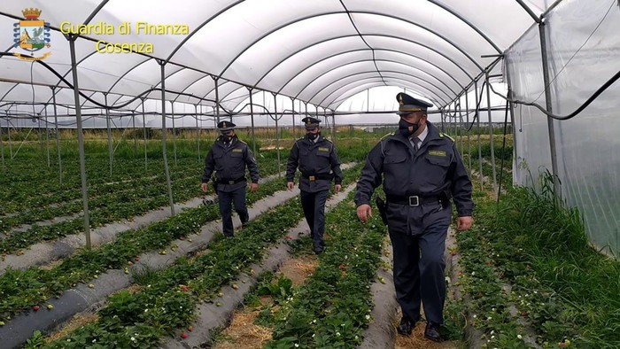 Indennità agricole non dovute, 67 denunciati nel Cosentino