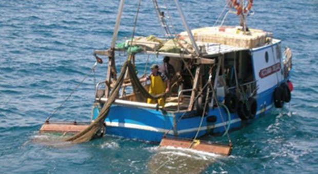 Federpesca incontra Battistoni: tutelare la flotta siciliana