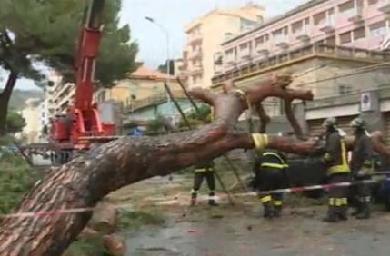 Nubifragio a Messina, cadono grandi alberi e strade allagate