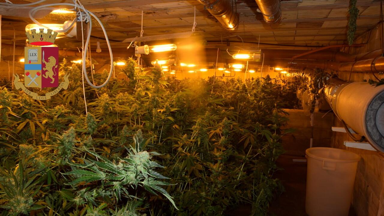 Palermo, serra tecnologica in un casolare con 900 piante di marijuana