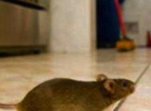 Palermo, i Nas trovano i topi in una scuola materna: chiusa