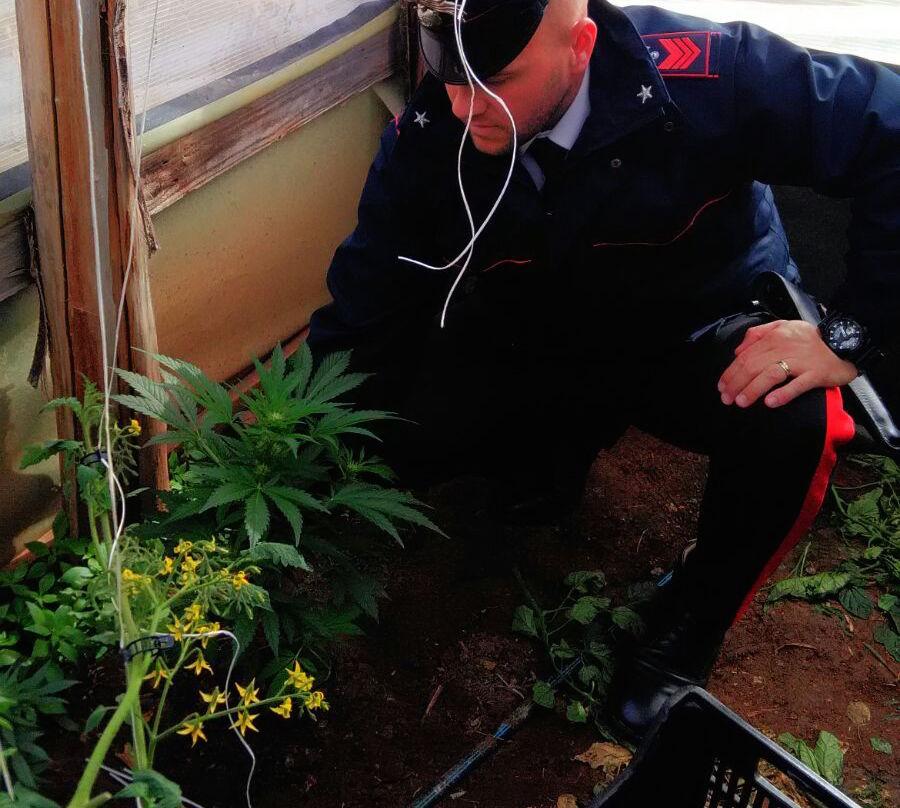 Messina. Arrestato corriere della droga: trasportava 57 chili di marijuana