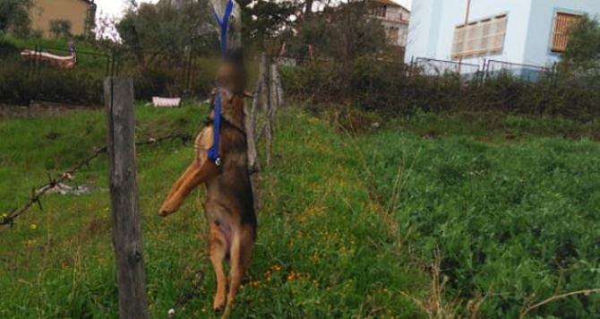 Un cane di media taglia trovato impiccato a un palo a Cassano allo Jonio
