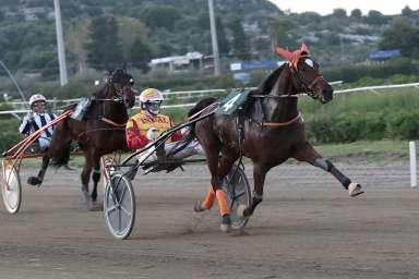 Trotto a Siracusa, in pista per il 'Premio Santa Lucia' per cavalli di 2 anni