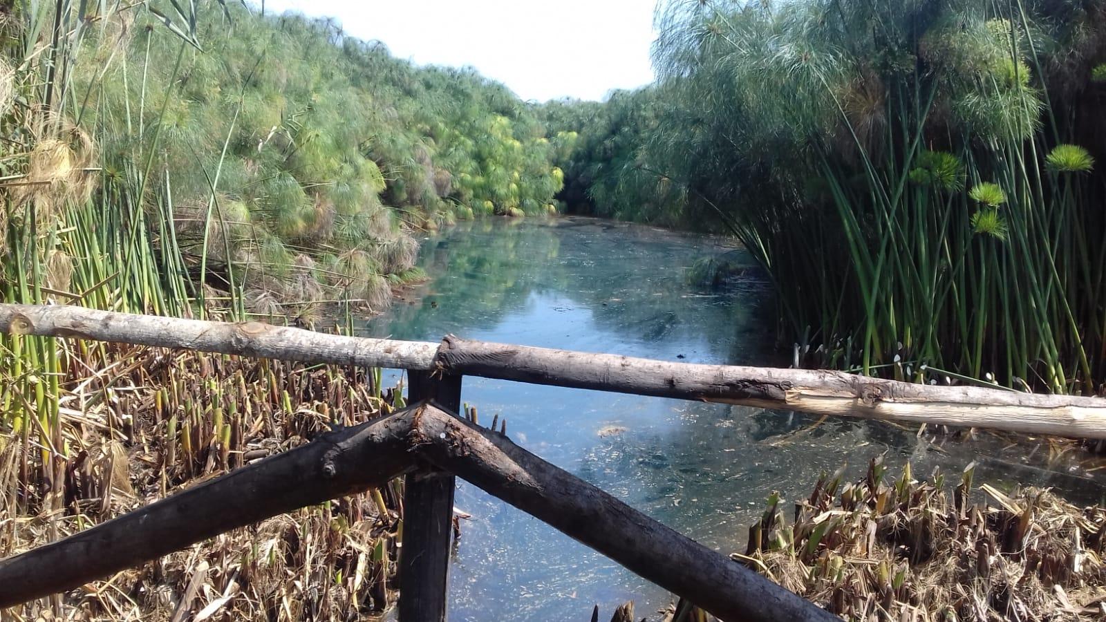 Siracusa, al Fiume Ciane potati il papiro e la cannuccia di palude