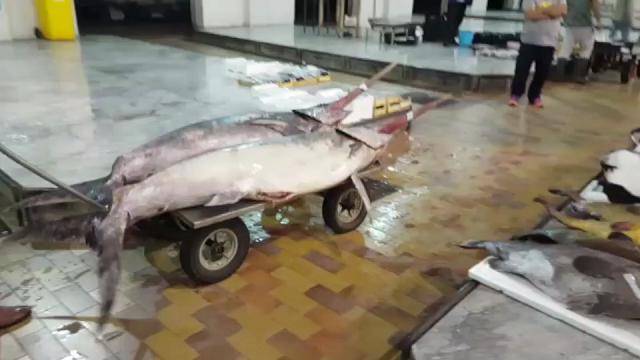 Il Comune di Palermo blocca le concessioni al mercato ittico