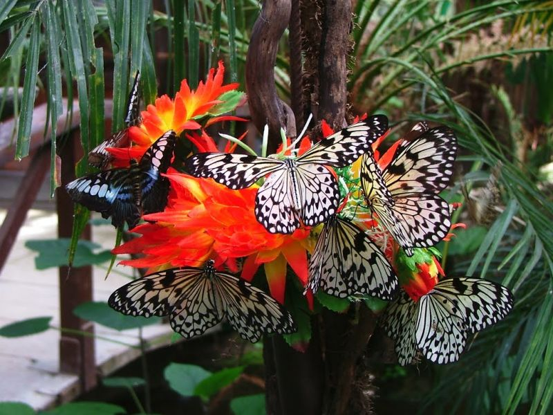 """Modica, in centro con la """"Casa delle farfalle"""""""
