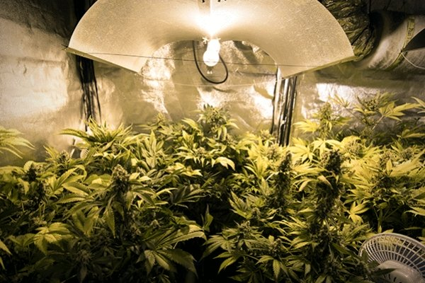 Belmonte Mezzagno, ruba energia per piantagione di droga: arrestato