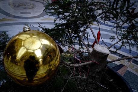 Ritrovato l'albero dei desideri: era stato vandalizzato nella notte