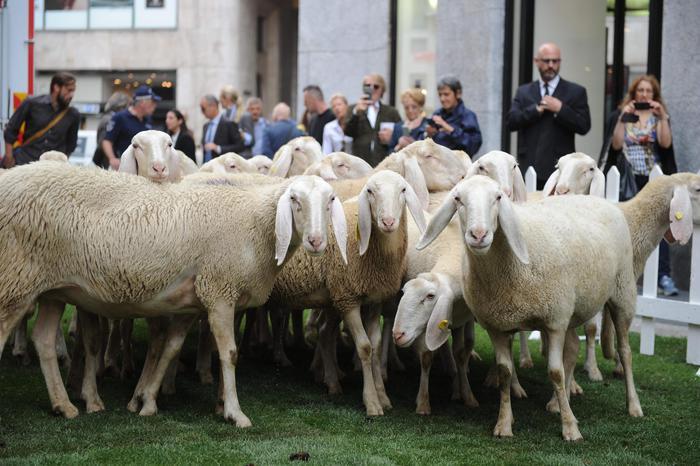 India, vale 71 pecore di risarcimento la moglie fuggita con l'amante
