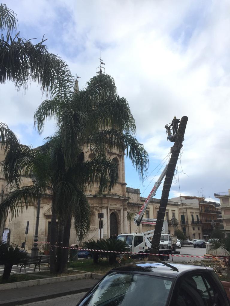 Floridia, perde un simbolo: abbattuta la palma di piazza Umberto I (VIDEO)