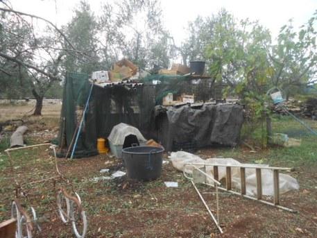 Animali denutriti e sporchi nel Barese, sequestro e denuncia