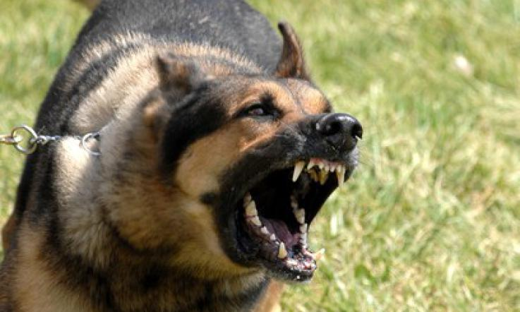 Aggredita dal proprio cane a Noto, diverse ferite al braccio