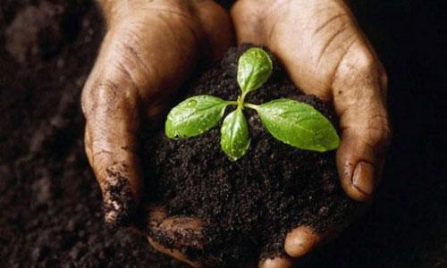 Palermo, agrumi: on line 'Agrorà', la piazza del lavoratori agricoli