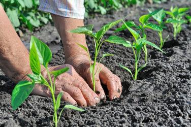 Agricoltura: Sicilia meno bio, al palo migliaia pratiche e 235 milioni