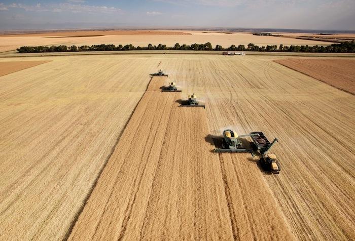 Agricoltura: Cracolici, grande conquista l'etichettatura del grano e del riso