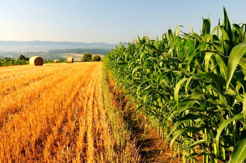 Modica, agricoltura e giardinaggio: le istruzioni per i lavoratori