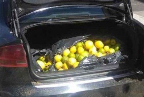 Siracusa, ruba agrumi a Traversa Carrozzieri: denunciato