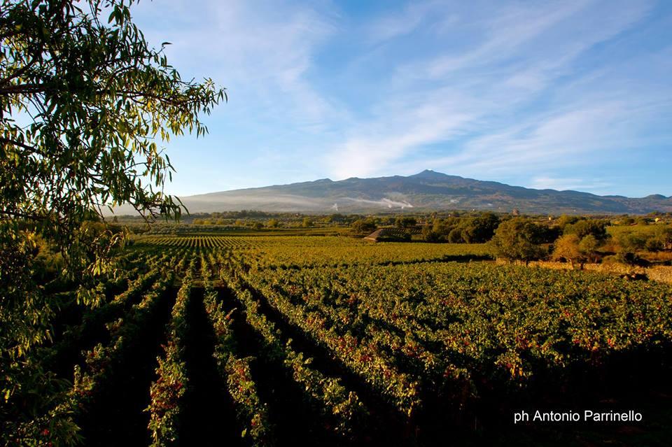 Vini, tre etichette 'made in Etna' conquistano le cinque stelle