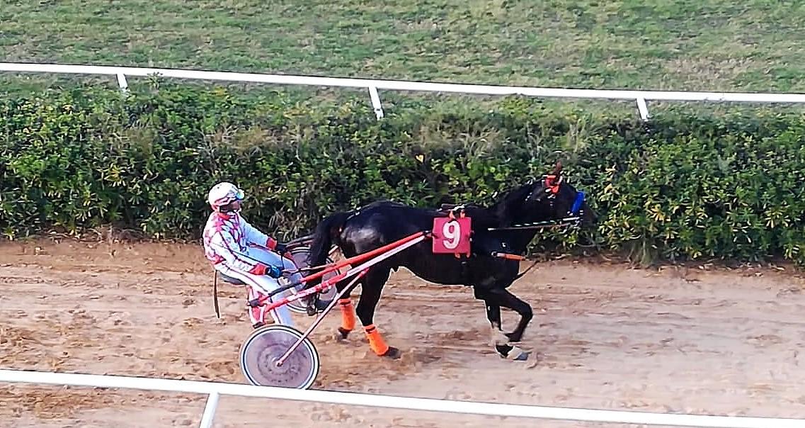 Trotto a Siracusa, Albaricoque vince il Premio di Ragusa con 150 metri di distacco