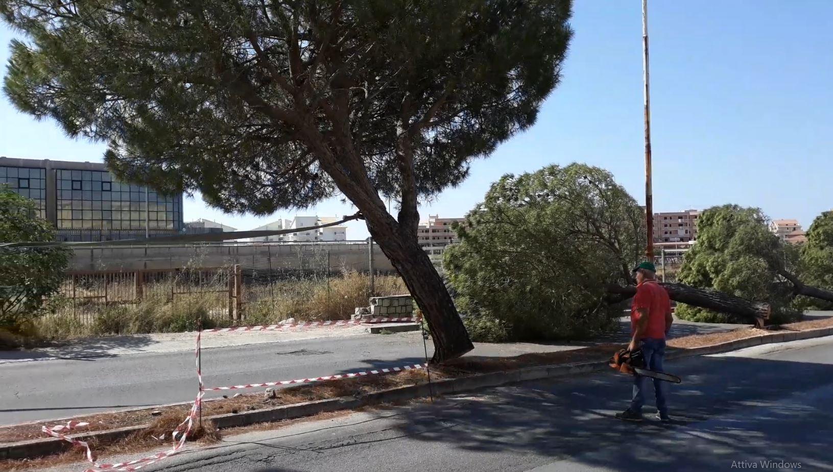 Modica, in via Aldo Moro abbattuti alberi dannosi: saranno sostituiti