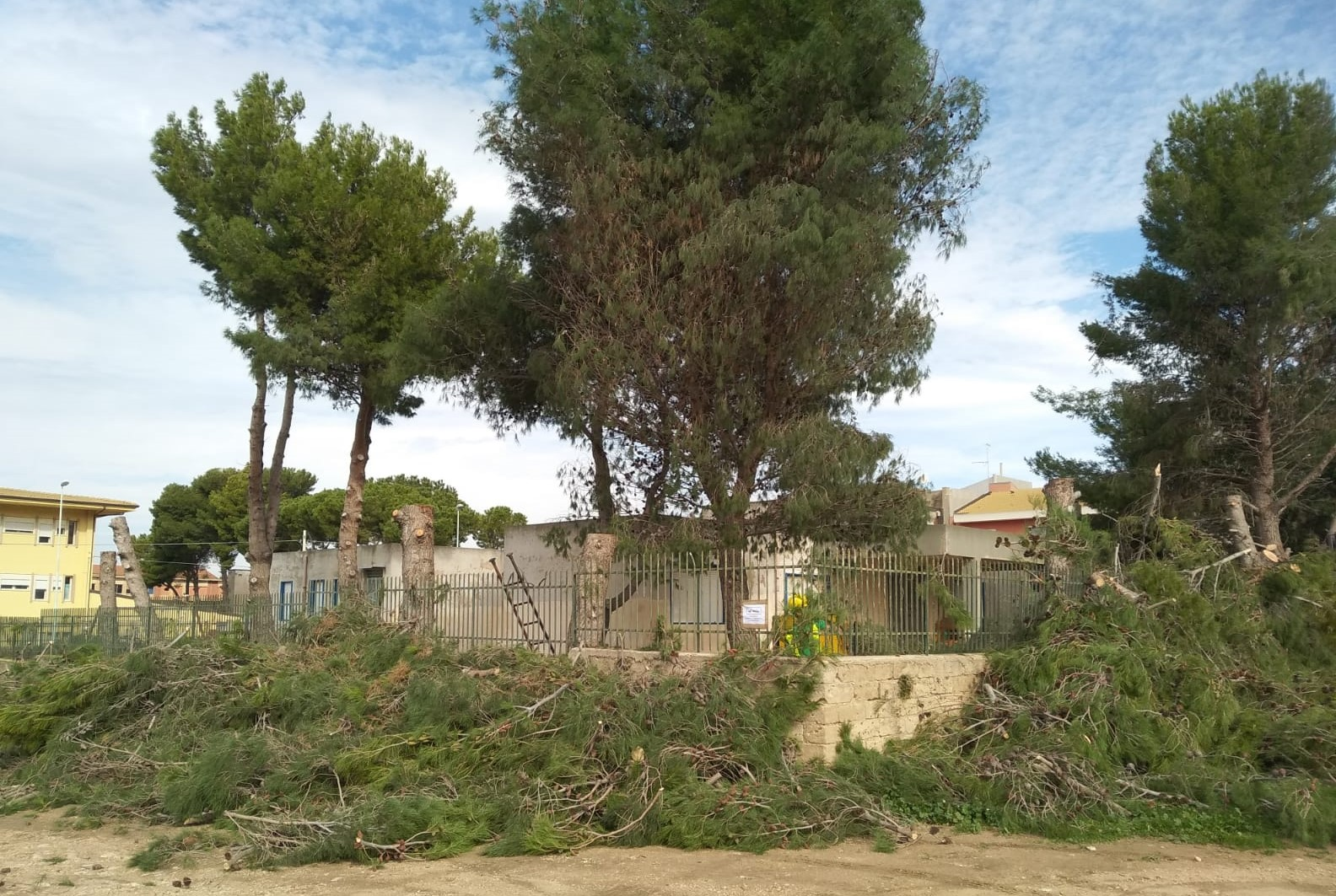 Comiso, tagliati gli alberi vicino alla scuola Don Bosco: se ne salvano solo tre