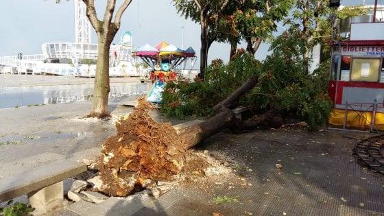 Maltempo, pioggia e vento a Bari: alberi abbattuti