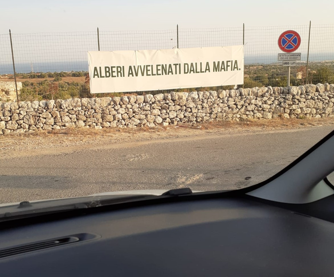 Il giallo di un messaggio sulla Modica-Pozzallo: alberi avvelenati dalla mafia