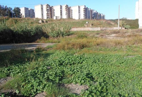 """Catania, Mirenda: """"Teatri e anfiteatri a Librino dimenticati"""""""