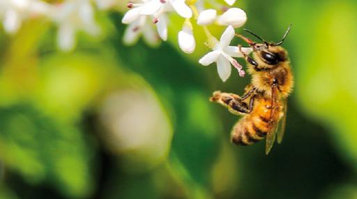 Agricoltura, la Coldiretti: anche api vittime di questa 'finta primavera'