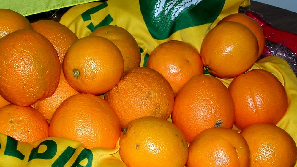 Distretto agrumi, arance siciliane in Cina anche via aerei
