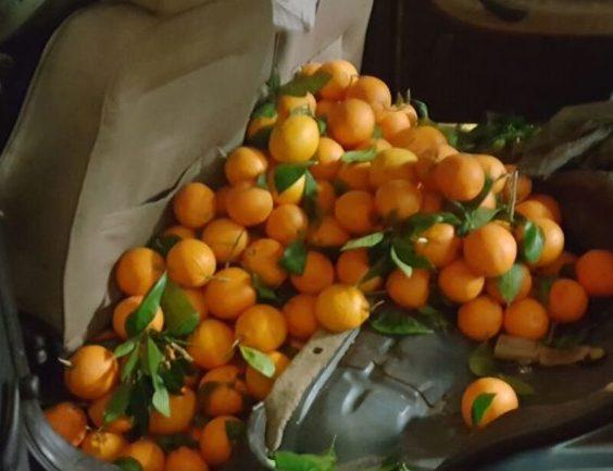 Lentini, rubano 500 chili di arance: 2 catanesi denunciati