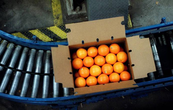 Le arance siciliane arriveranno in Cina con il trasporto aereo