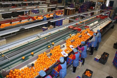 Le arance siciliane in Cina, partono i primi container