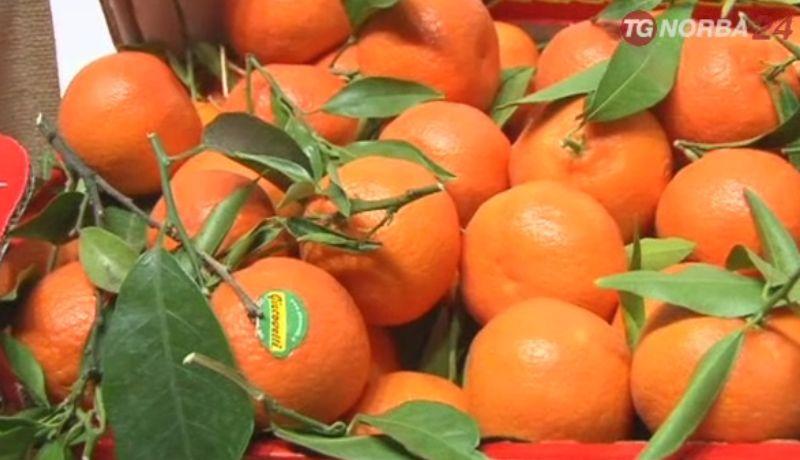 Avola, denunciato a piede libero per ricettazione di arance