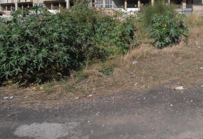 """Catania, """"recuperare le aree abbandonate della IV municipalità"""""""