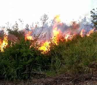 """Rosolini, aree incolte: """"Si provveda alla bonifica per evitare gli incendi"""""""