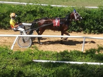 Trotto a Siracusa, non era favorito ma Arkogam si aggiudica la corsa centrale