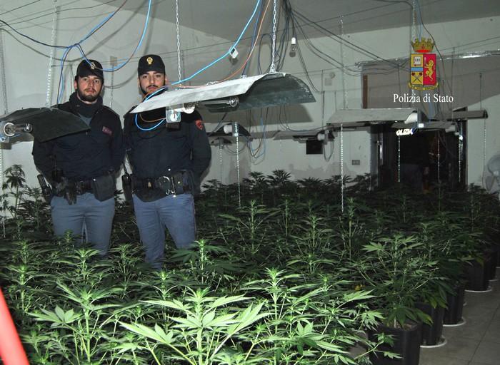 Armi e piantagione di droga a Palermo, arrestati padre e figlio