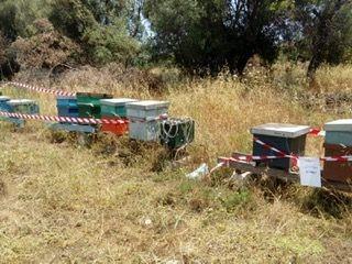 Lentini, scoperte due arnie infestate: apicoltore nuovamente denunciato