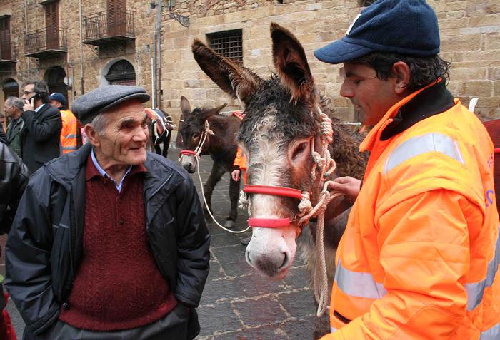 L'asino cade per la troppa spazzatura: polemiche a Castelbuono