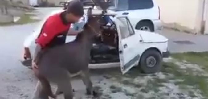 Termini Imerese, fa entrare l'asino dentro l'auto: finisce sotto processo