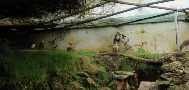 Nidiata di avvoltoi a Villa d'Orleans, Musumeci ferma i lavori di restauro