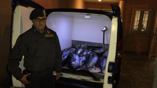 La Finanza sequestra a Bagheria tonno rosso per 350 chilogrammi