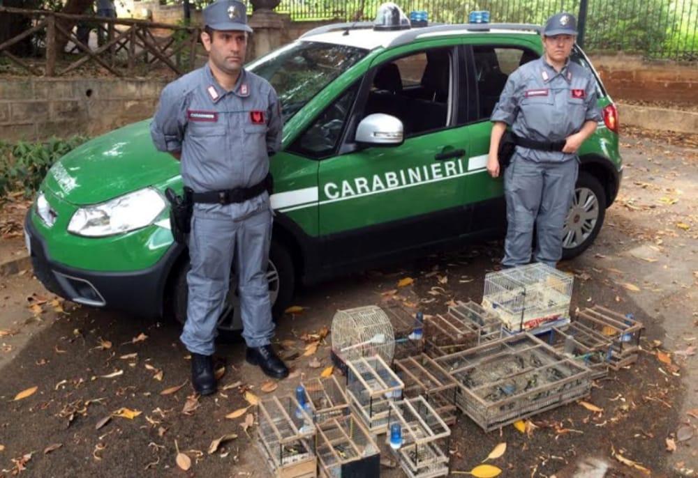 Palermo, sequestrati al mercato di Ballarò 60 volatili di specie protetta