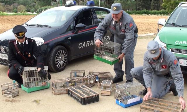 Palermo, Blitz dei carabinieri al mercato di Ballarò: liberi 61 volatili